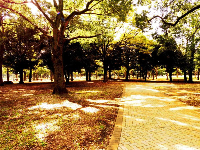代々木公園の秋の小道