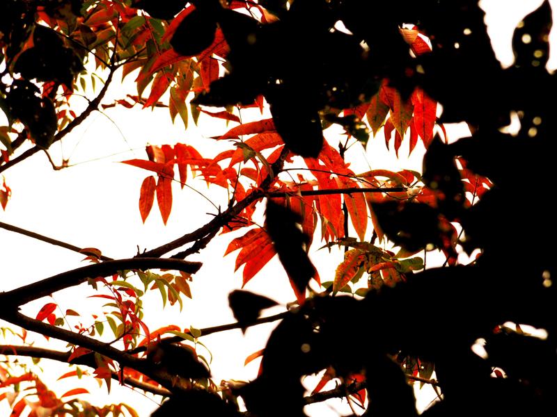 隙間からの秋
