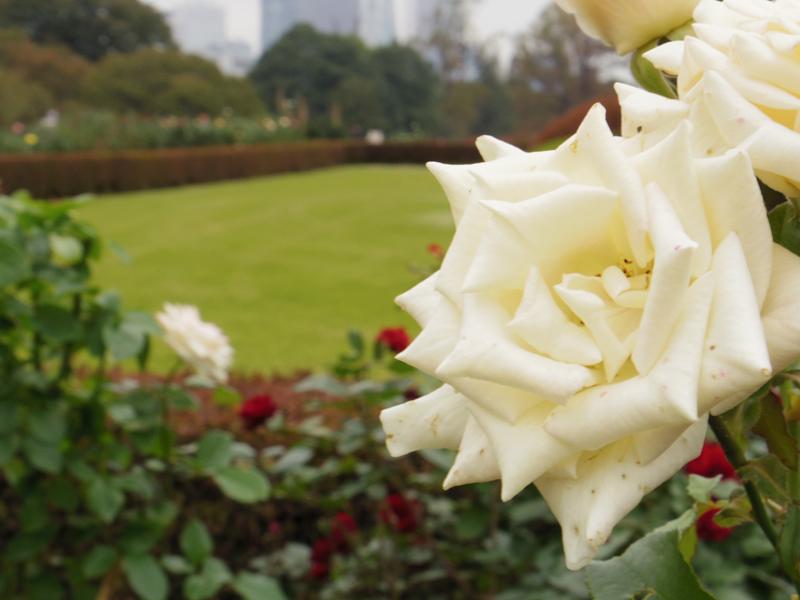 新宿御苑の薔薇園