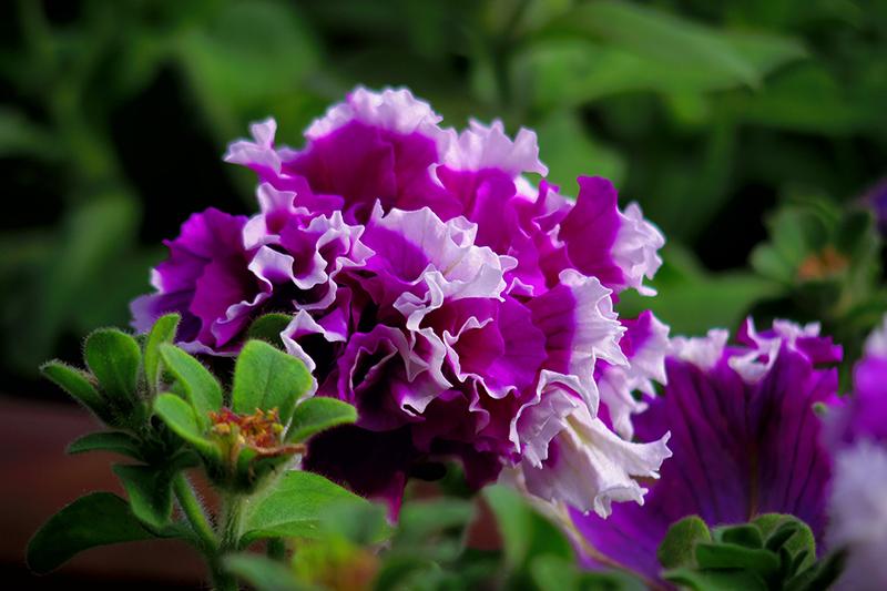 初夏の花 (Q7)